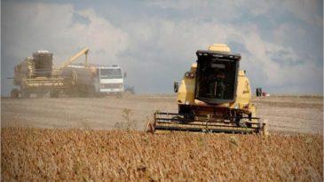 Fuerte caída de la soja en Chicago y en Rosario